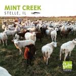 Mint creek_1080x1080